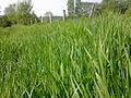 Herbe et clôture à Grez-Doiceau 001.jpg