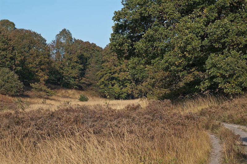File:Herbst Elfenmeer 5.jpg