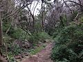 Hiking trail near Laguna Grande (23402961045).jpg