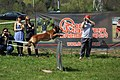 HiperParada animalelor la CORA (4549146846).jpg