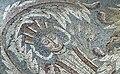 Hippolytus mosaic 03.jpg