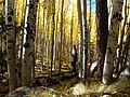 Historical Letters, Aspen, Trailhead, Trail 77, Gooseberry Trail, Cibola, National Forest - panoramio.jpg