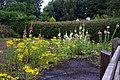 Hollyhocks in Cothill - geograph.org.uk - 1404691.jpg