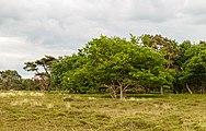 Hondsrug, De Strubben-Kniphorstbosch 018.jpg