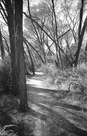 Western Mallee - Mallee woodland near Hyden
