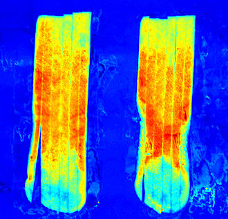 "Optical sorting - Hyperspectral image of ""sugar end"" potato strips shows invisible defects"