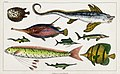 Illustration from A History of the Earth and Animated Nature by Oliver Goldsmith from rawpixel's own original edition of the publication 00104.jpg