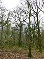 Ilsington Woods - geograph.org.uk - 748365.jpg