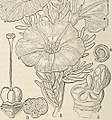 "Image from page 727 of ""The vegetable kingdom - or, The structure, classification, and uses of plants, illustrated upon the natural system"" (1846) (14581408678).jpg"