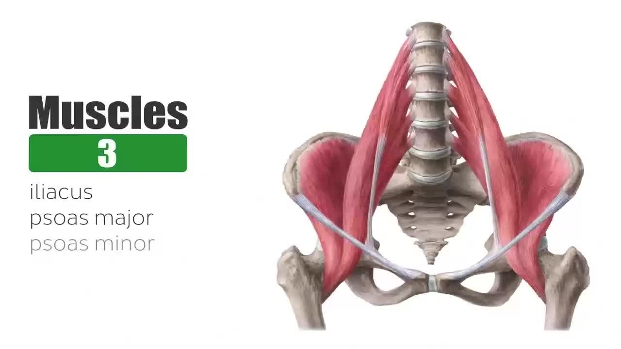 Hip anatomy video