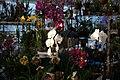 Internationale Orchideen- und Tillandsienschau Blumengärten Hirschstetten 2016 c.jpg
