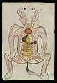 Intestinal system of a Horse Wellcome L0035204.jpg