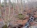 Invierno 2011 en Tejera negra - panoramio (10).jpg