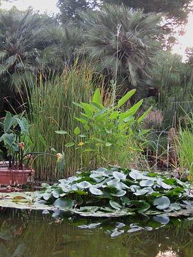 Jard n bot nico de la universidad de valencia wikipedia for Botanic com jardin