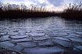 Jezioro Dobskie.jpg
