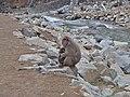 Jigokudani YaenKouen (Monky park) , 地獄谷 野猿公苑 - panoramio (29).jpg