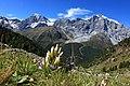 Königsspitze Monte Zebru und Ortler.jpg