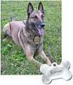 K-9 Hall of Fame - Flickr - The Central Intelligence Agency (4).jpg