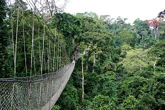 Kakum National Park - The Kakum Canopy Walk