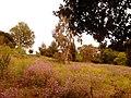 Kifisia, Greece - panoramio (36).jpg