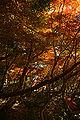 Kobe Suma Rikyu Park04n4592.jpg