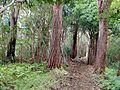 Koolau Forest Reservat.jpg