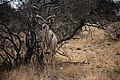 Kruger National Park, South Africa (36775182122).jpg