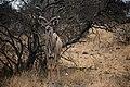 Kruger National Park, South Africa (36775182122).jpg