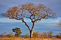 Kruger Park Scenery - HDR (7645852578).jpg