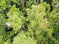 Kuranda QLD 4881, Australia - panoramio (42).jpg