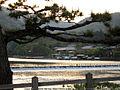 Kyoto arashiyama 4.jpg