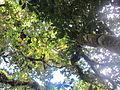 La Amistad Panama Biosphere Reserve - Parque Nacional Volcan Baru (a core zone) 22.JPG