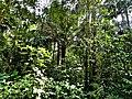 La selva en el Amboró.jpg