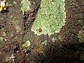 Ladybug, Ladybird - ആമവണ്ട്.jpg