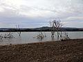 Lago di San Giuliano, alberi.jpg