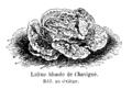Laitue blonde de Chavigné Vilmorin-Andrieux 1904.png