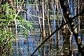 Lake Apopka North Shore (193036913).jpeg