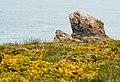Landes littorales.jpg