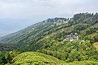 Landscape of Darjeeling,India.jpg