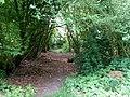 Landschaftsschutzgebiet Wäldchen bei Buer Melle Datei 34.jpg