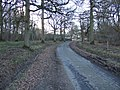 Lane to Garston's Farm - geograph.org.uk - 130246.jpg