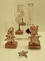 Larves d'Echinodermes-Musée zoologique de Strasbourg.jpg