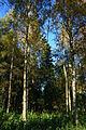 Lavspentlinje gjennom skog - en kabel.JPG