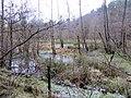 Laymoor Quag - Linear Park - March 2013 - panoramio.jpg