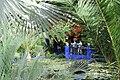 Le jardin des majorelle 608.JPG