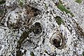 Les Clées Gorges de l'Orbe 3.jpg