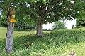 Les Fruitières de Nyon - panoramio (5).jpg
