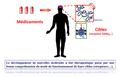 Les récepteurs membranaires comme cibles thérapeutiques.png