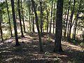 Letchworth Mounds11.jpg