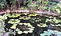 Lily pond in Palms Tropical Oasis at Stapeley Garden centre - geograph.org.uk - 377437.jpg